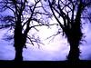 sessantadue - hug me (e_lisewin) Tags: trees alberi ferrara mura sera abbraccio