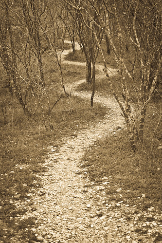 Wooded Path - 269/365 - 5 March 2010