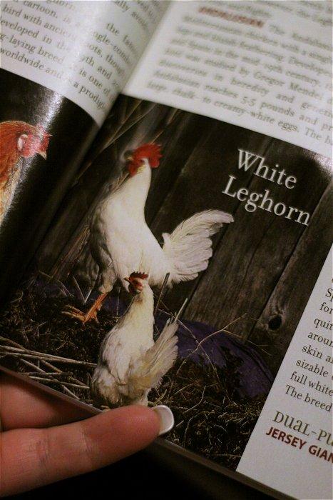 03-11-chickensmag2