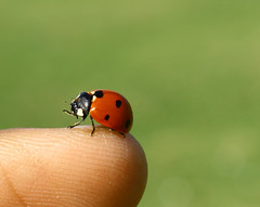 3lewes mother On my finger ...!! (Fahad al-Khashti) Tags: