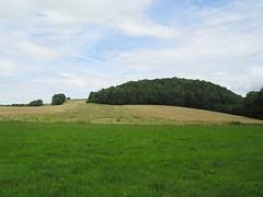 Gerstenfeld im Juni