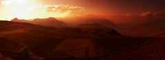 Yemeni sunset (Sergey Kusnetzov) Tags: travel tree nature beautiful landscape blood fantastic paradise dragon scenic east exotic arabia yemen middle socotra