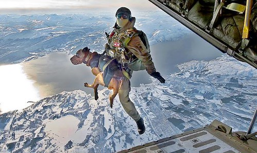 Combat dogs take to the skies for secret missions in Afghanistan