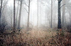 winter remains (.ultraviolett) Tags: wood winter light fog forest foggy