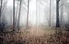 winter remains (.ultraviolett) Tags: wood winter light fog forest foggy