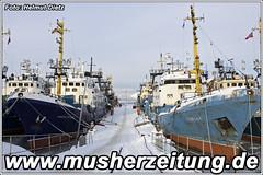 Finnmarkslopet: Kirkenes-Hafen