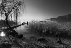 Silenzi e quiete (Oriana Milani (poco tempo)) Tags: trees bw white black alberi landscape nikon bn bianco nero paesaggio lagodigarda d80 1116mm blackwhiteartawards neroamet