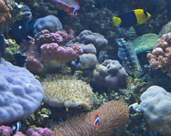 Reef exihbit on ocean acidification.