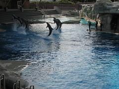 """Oltremare -  27 03 2010_200 (Bludipersia) Tags: italien italy italian flickr italia dolphin themepark riccione delfino delfini themenpark oltrmare acquafan parcàthème parcotematico bludipersia emiliaromagna"""""""