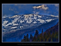 Mountain Light (kootenaynaturephotos.com) Tags: trees light mountain snow landscape potofgold flickraward flickraward5 mygearandme mygearandmepremium mygearandmebronze
