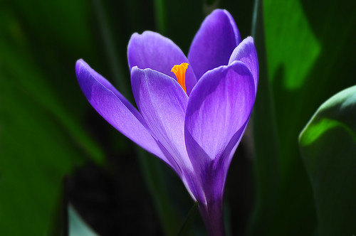 Crocus Weather