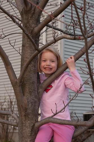 Tree and Swingset
