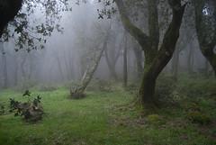 Enchanted forest... (..Alba..) Tags: forest landscape nebbia ales paesaggio enchanted foresta acquafrida
