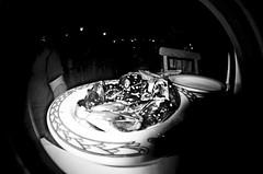 Mussels (Duodenum Rex) Tags: arizona blackandwhite analog 35mm lomography fisheye tempe avenueqtour