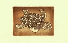 морская черепаха-коричневый 001 (tim.spb) Tags: original sea etching turtle postcard small ornament plates desigh открытки графика малые aquafortis формы офорт печатные