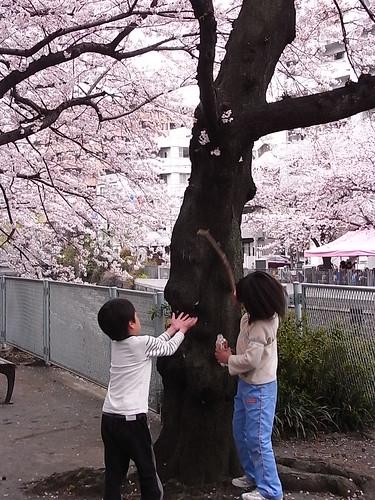 RIMG1445 桜花爛漫 帷子川 4/4 2010