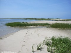 Great Island Marsh (The Cape Cod 2) Tags: beach capecod marsh wellfleet greatisland