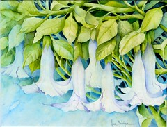 Trumpets (Ani Kin) Tags: flowers flower art floral fleurs watercolor painting tropical watercolour datura floripondio floweringtrees tropicalflowers trumpetflowers floralpainting florifundio