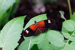 baudchon-baluchon-mindo-papillons-8