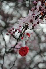 Infncia (thiagofigueiredo) Tags: flores infncia suavidade