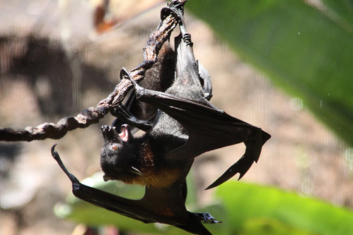 scene from a bat fight