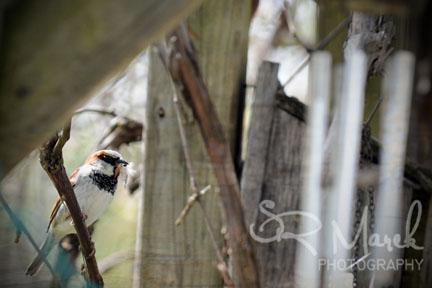 Day 110 - Sparrow