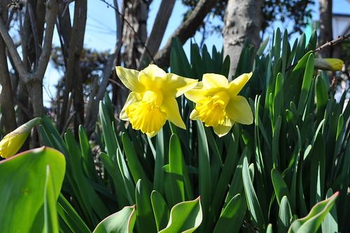 flower 2010.4.27-2