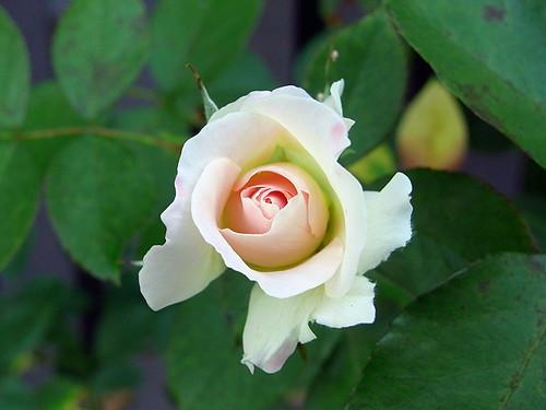 Macro Flower 10