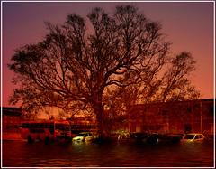 (Sheet Pangasa) Tags: sunset orange sun plant colour tree water set landscape dawn intense bright extreme bold top20sunsetsofourhearts