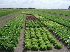 Campo de cultivo