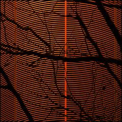 still growing (barbera*) Tags: orange black building tree london lines vent branches curves heathrowairport barbera jibbr 667912