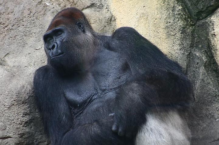 台北木柵動物園0059