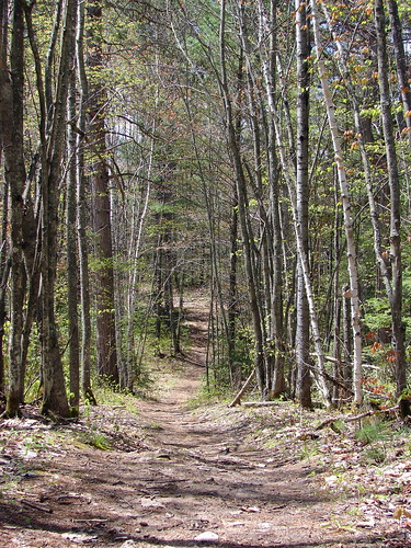 Raven Trail