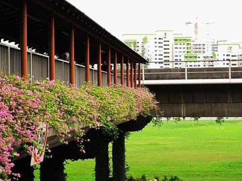 IMG_0222 Lakeside MRT Station ,Singapore