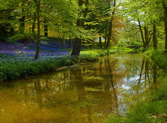 Spring at Whitmore (~Rob~) Tags: bluebells reflections landscapes staffordshire 500faves whitmore