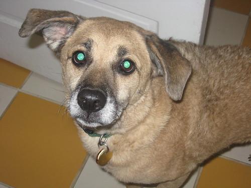 Maxs ears really make me laugh!!