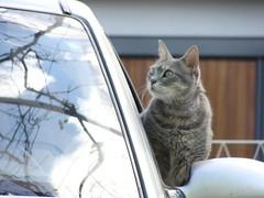 gata curiosa (Mariana BMS) Tags: animal cat gato felino bibi bicho marianabms