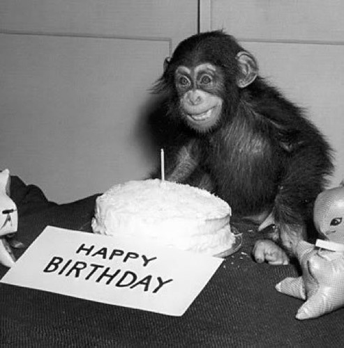 chimp-birthday