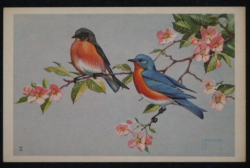 vintage birds 002