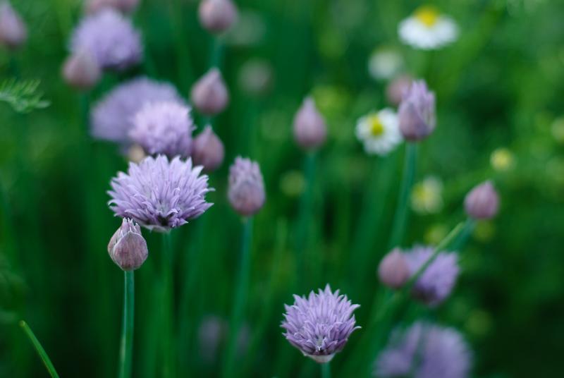Spring in Botanic garden #36