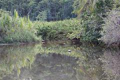 baudchon-baluchon-costa-rica-cahuita-14