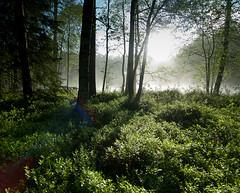 IMG_6225 (Sami Heiskanen) Tags: summer espoo suomi finland nationalpark mets nuuksio kes kansallispuisto nuuksionkansallispuisto forest2010