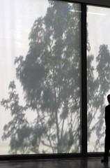 This is not a tree III (Rainer ) Tags: light shadow tree art backlight contrast essen surreal arbre baum davidchipperfield museumfolkwang rainer