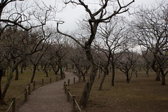Mito plums (mavyrnc) Tags: japan geotagged japon japn ibarakiken motoyamachou geo:lat=3637534020 geo:lon=14045177221