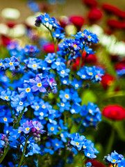 flowers and bokeh (1yen) Tags: travel travelling germany weimar thringen om eastgermany ostdeutschland 43omadapter zuikoom24mmf28 thringen