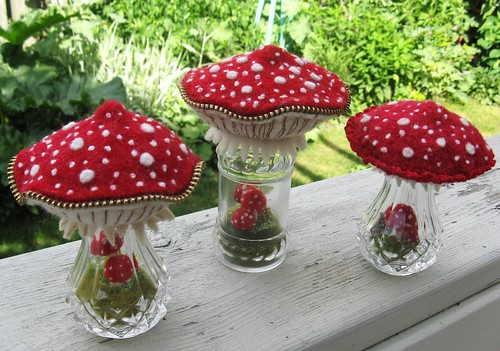 A few more mushroom terrariums