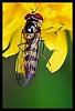 8 - 1er juin 2010 Alfortville Chemin latéral Insecte (melina1965) Tags: flowers flower macro fleur june fleurs insect juin spring nikon îledefrance insects printemps insecte insectes 2010 valdemarne maisonsalfort d80 geniiloci flickrelitegroup thisphotorocks leagueofwomenphotographers искусствооfoto