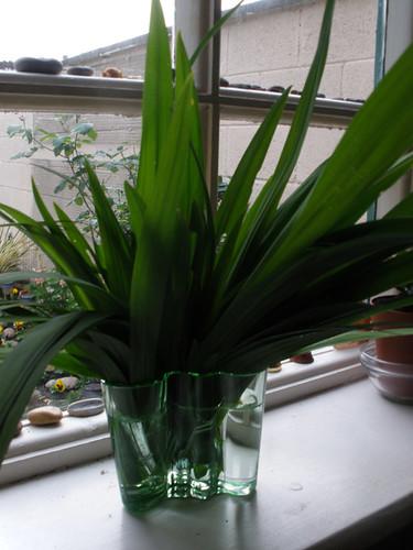 Mam sent me a new green Aalto vase =)