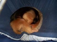 Eldorado in his hammock