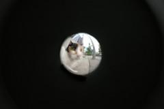 ラムネビー玉レンズで撮った三毛猫